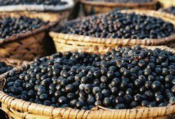 The Health Benefits of the Acai Berry.