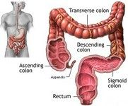 Colon Cleanse / Colon Anatomy